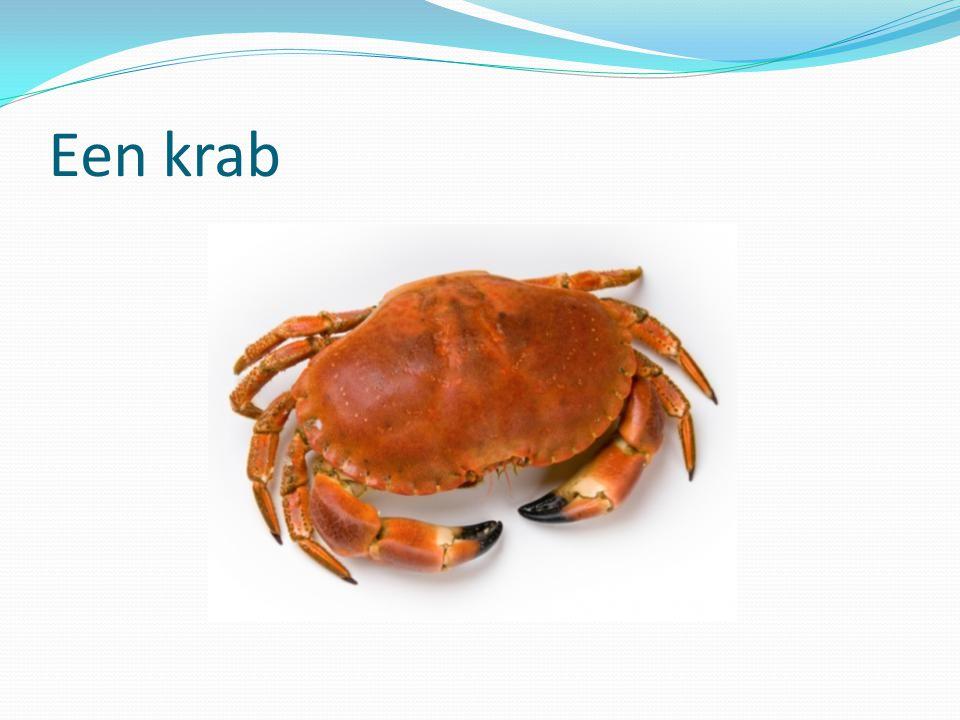 Een krab