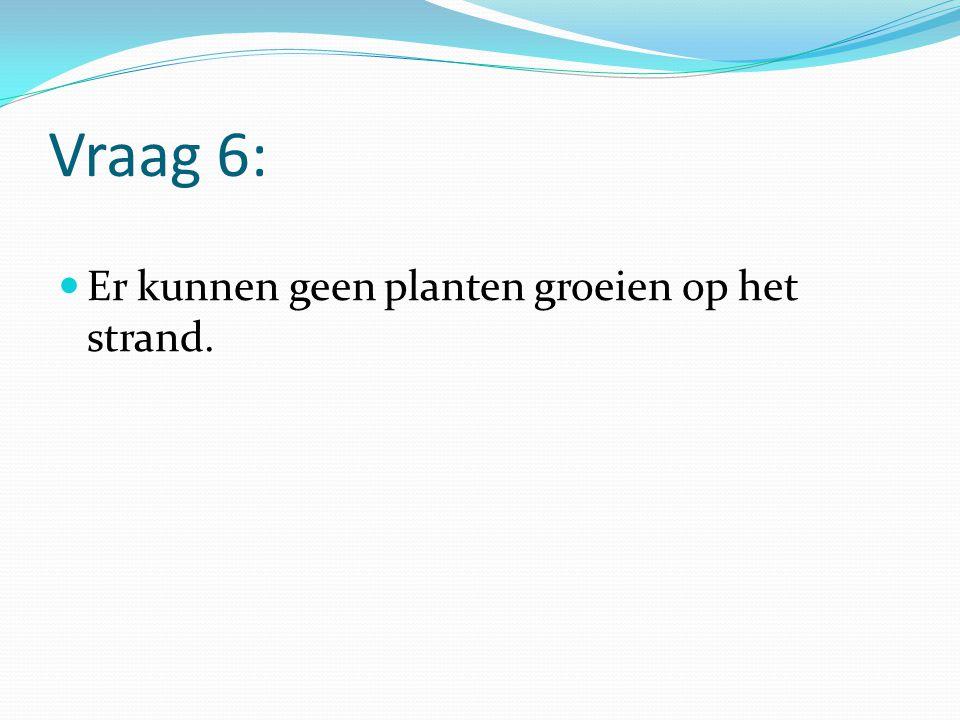 Vraag 6: Er kunnen geen planten groeien op het strand.
