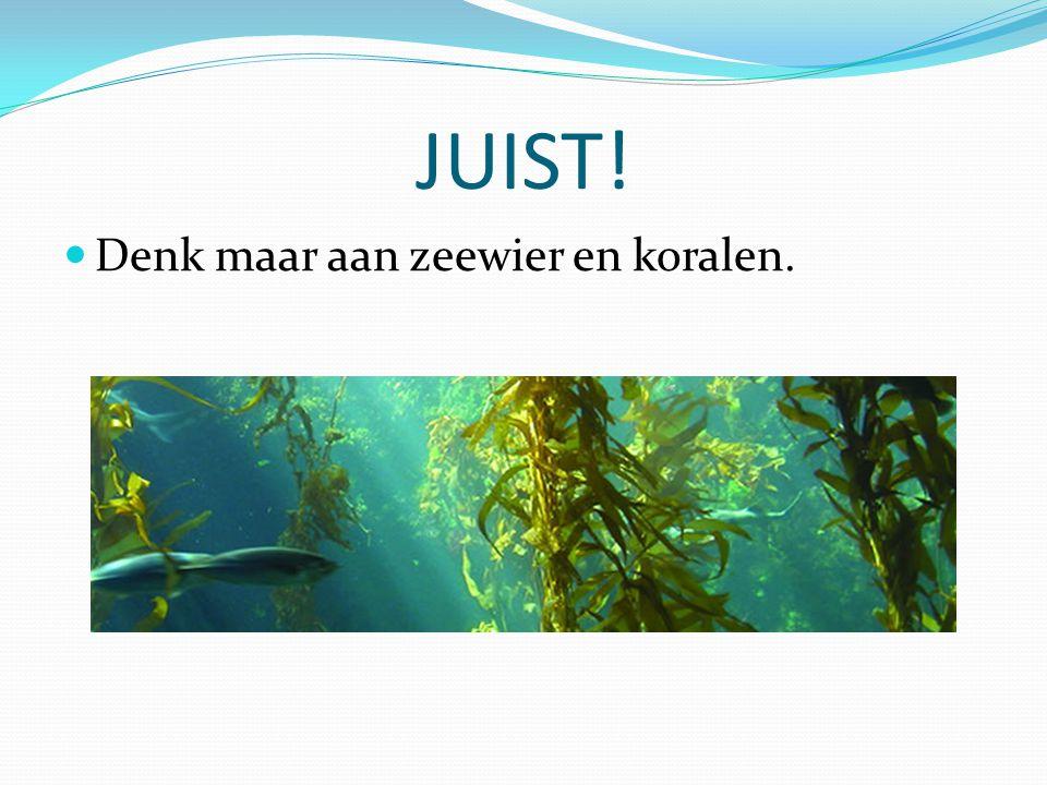 JUIST! Denk maar aan zeewier en koralen.