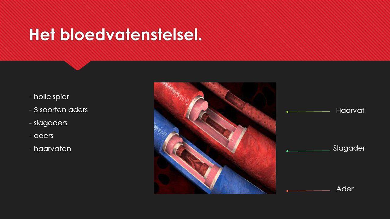 Het bloedvatenstelsel. - holle spier - 3 soorten aders - slagaders - aders - haarvaten - holle spier - 3 soorten aders - slagaders - aders - haarvaten