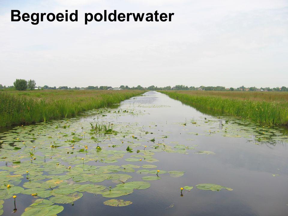 Begroeid polderwater