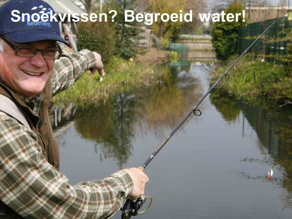 Snoekvissen? Begroeid water!