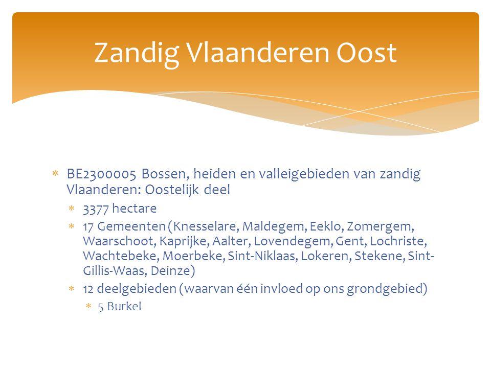  BE2300005 Bossen, heiden en valleigebieden van zandig Vlaanderen: Oostelijk deel  3377 hectare  17 Gemeenten (Knesselare, Maldegem, Eeklo, Zomergem, Waarschoot, Kaprijke, Aalter, Lovendegem, Gent, Lochriste, Wachtebeke, Moerbeke, Sint-Niklaas, Lokeren, Stekene, Sint- Gillis-Waas, Deinze)  12 deelgebieden (waarvan één invloed op ons grondgebied)  5 Burkel Zandig Vlaanderen Oost