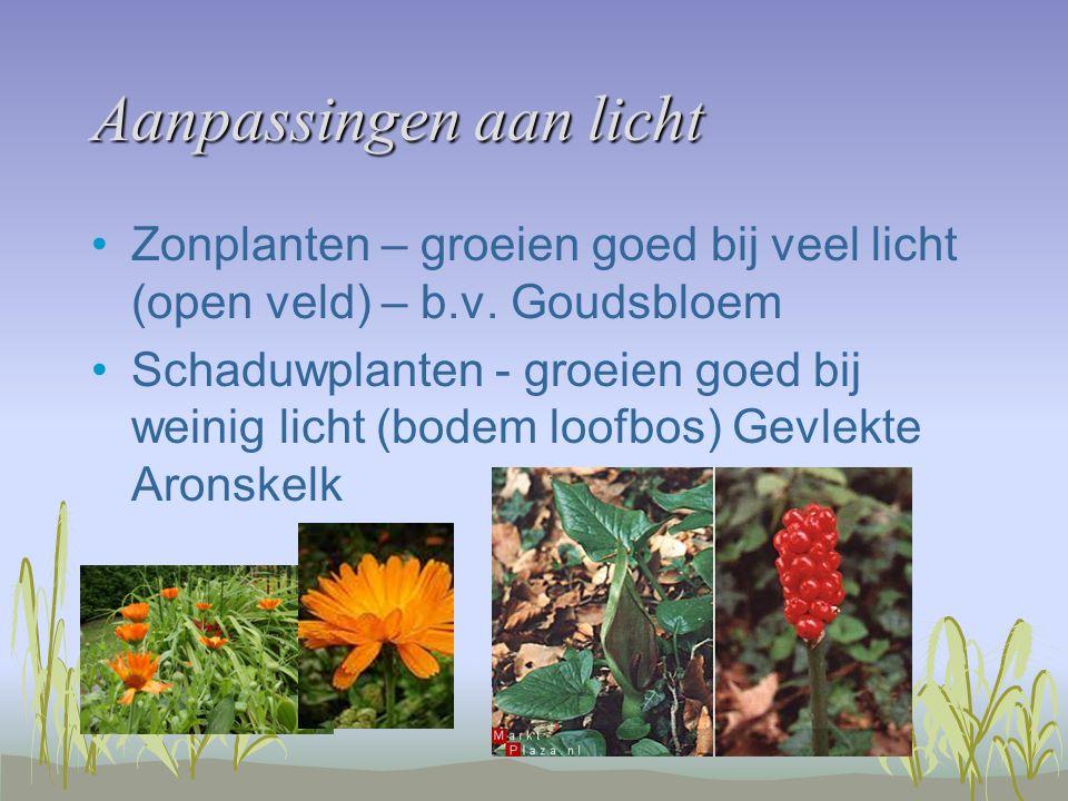Aanpassingen aan licht Zonplanten – groeien goed bij veel licht (open veld) – b.v. Goudsbloem Schaduwplanten - groeien goed bij weinig licht (bodem lo