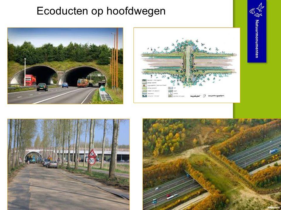 Ecoducten op hoofdwegen
