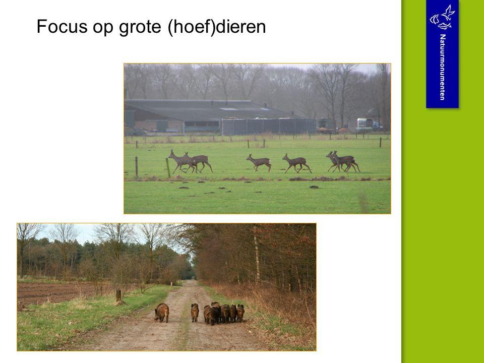 Focus op grote (hoef)dieren