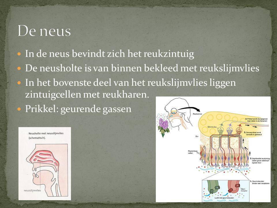 In de neus bevindt zich het reukzintuig De neusholte is van binnen bekleed met reukslijmvlies In het bovenste deel van het reukslijmvlies liggen zintu