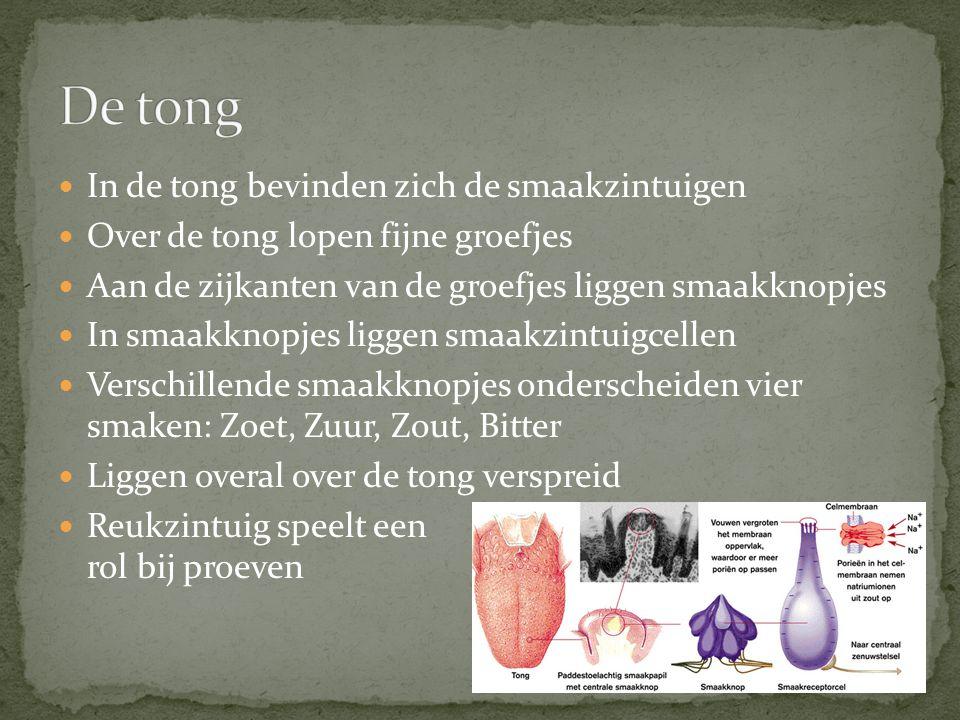 In de tong bevinden zich de smaakzintuigen Over de tong lopen fijne groefjes Aan de zijkanten van de groefjes liggen smaakknopjes In smaakknopjes ligg