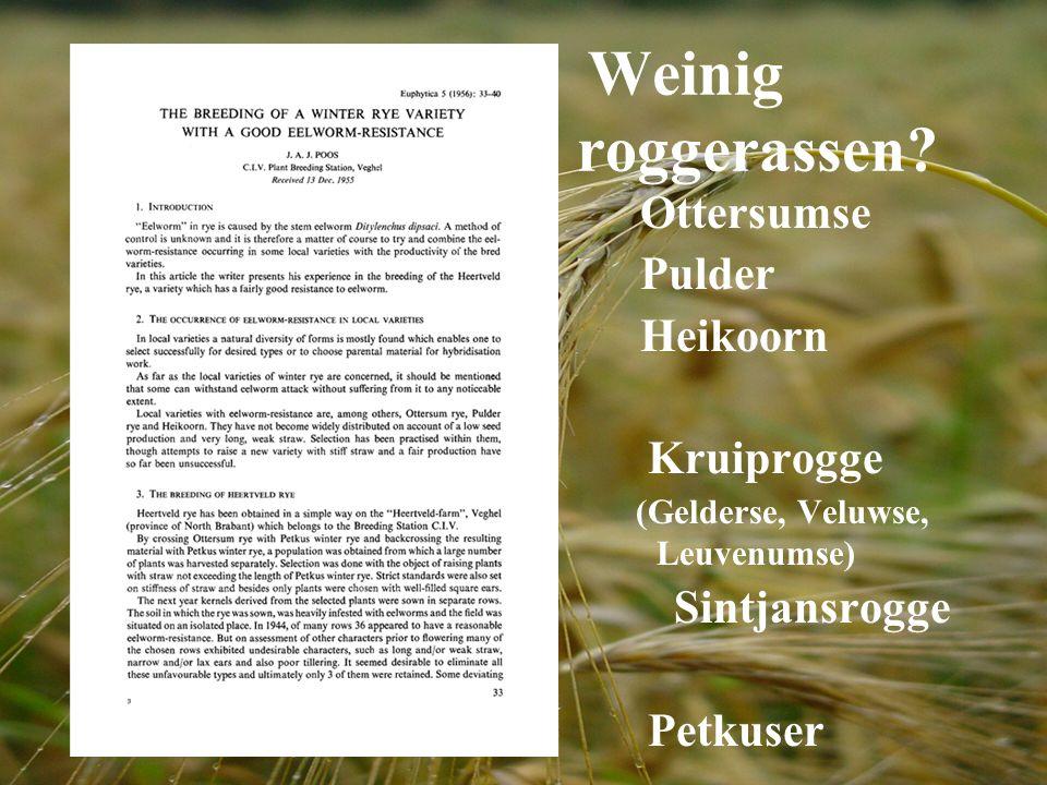Weinig roggerassen? Ottersumse Pulder Heikoorn Kruiprogge (Gelderse, Veluwse, Leuvenumse) Sintjansrogge Petkuser