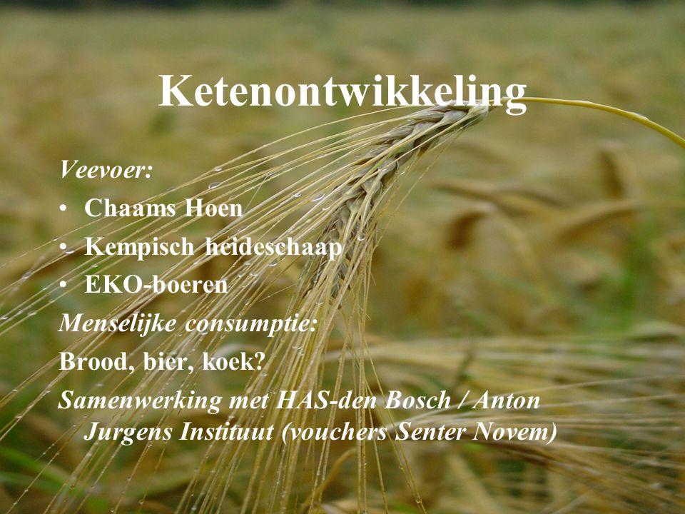 Ketenontwikkeling Veevoer: Chaams Hoen Kempisch heideschaap EKO-boeren Menselijke consumptie: Brood, bier, koek? Samenwerking met HAS-den Bosch / Anto