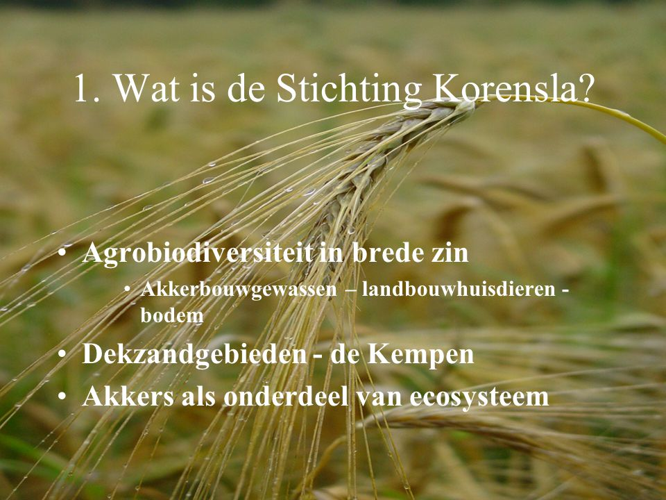 1.Wat is de Stichting Korensla.