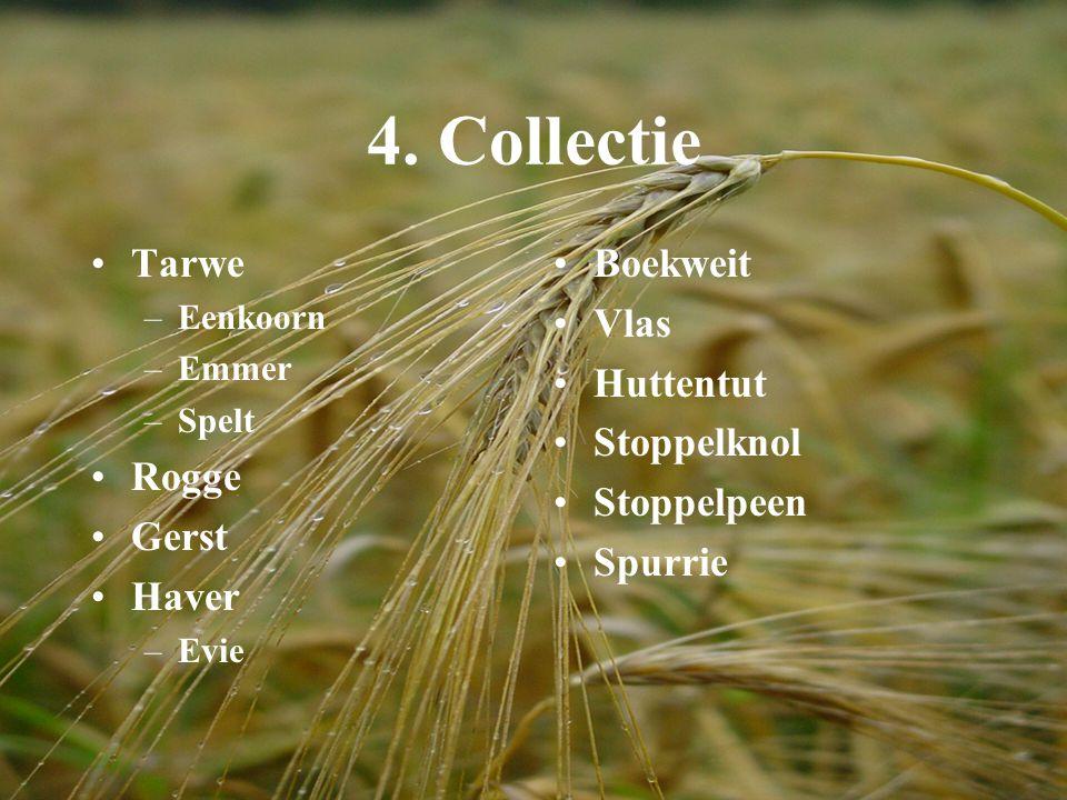 4. Collectie Tarwe –Eenkoorn –Emmer –Spelt Rogge Gerst Haver –Evie Boekweit Vlas Huttentut Stoppelknol Stoppelpeen Spurrie