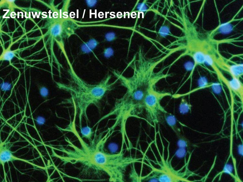 1 Zenuwstelsel / Hersenen