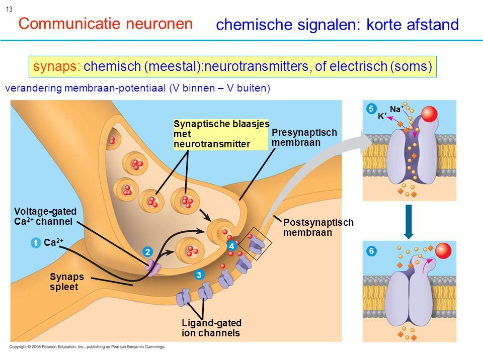 13 Voltage-gated Ca 2+ channel Ca 2+ 1 2 3 4 Synaps spleet Ligand-gated ion channels Postsynaptisch membraan Presynaptisch membraan Synaptische blaasjes met neurotransmitter 5 6 K+K+ Na + Communicatie neuronen chemische signalen: korte afstand synaps: chemisch (meestal):neurotransmitters, of electrisch (soms) verandering membraan-potentiaal (V binnen – V buiten)