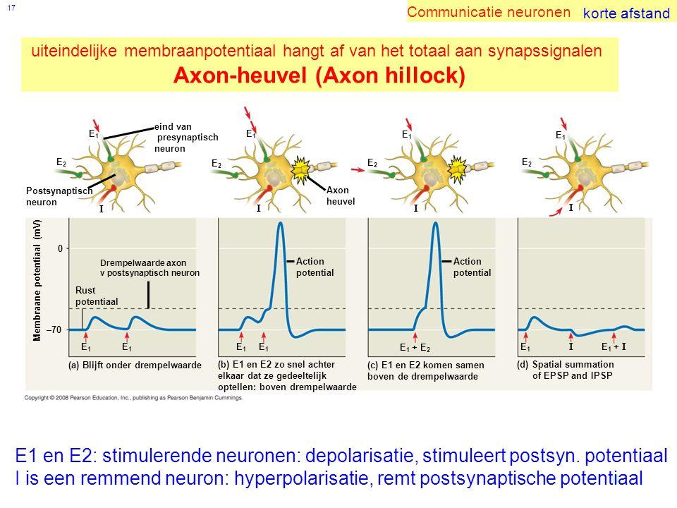 17 eind van presynaptisch neuron E1E1 E2E2 I Postsynaptisch neuron Drempelwaarde axon v postsynaptisch neuron Rust potentiaal E1E1 E1E1 0 –70 Membraane potentiaal (mV) (a) Blijft onder drempelwaarde (b) E1 en E2 zo snel achter elkaar dat ze gedeeltelijk optellen: boven drempelwaarde E1E1 E1E1 Action potential I Axon heuvel E1E1 E2E2 E2E2 E1E1 I Action potential E 1 + E 2 (c) E1 en E2 komen samen boven de drempelwaarde I E1E1 E 1 + I (d) Spatial summation of EPSP and IPSP E2E2 E1E1 I E1 en E2: stimulerende neuronen: depolarisatie, stimuleert postsyn.