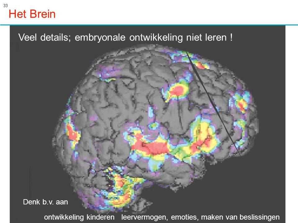 33 Het Brein Veel details; embryonale ontwikkeling niet leren .