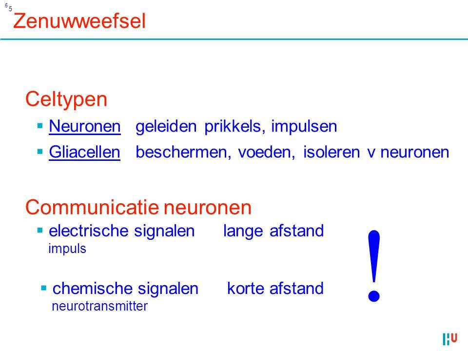 16 + - - Communicatie neuronen korte afstand