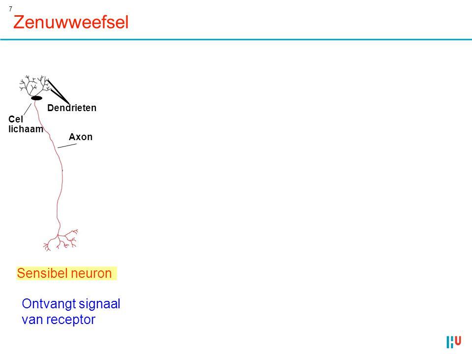 7 Motor neuron Stuurt signaal naar effector (spier) Zenuwweefsel Dendrieten schakelneuron Portion of axon Cell bodies of overlapping neurons Integreert signalen (hersenen ganglia) 80 µm Sensibel neuron Axon Cel lichaam Ontvangt signaal van receptor