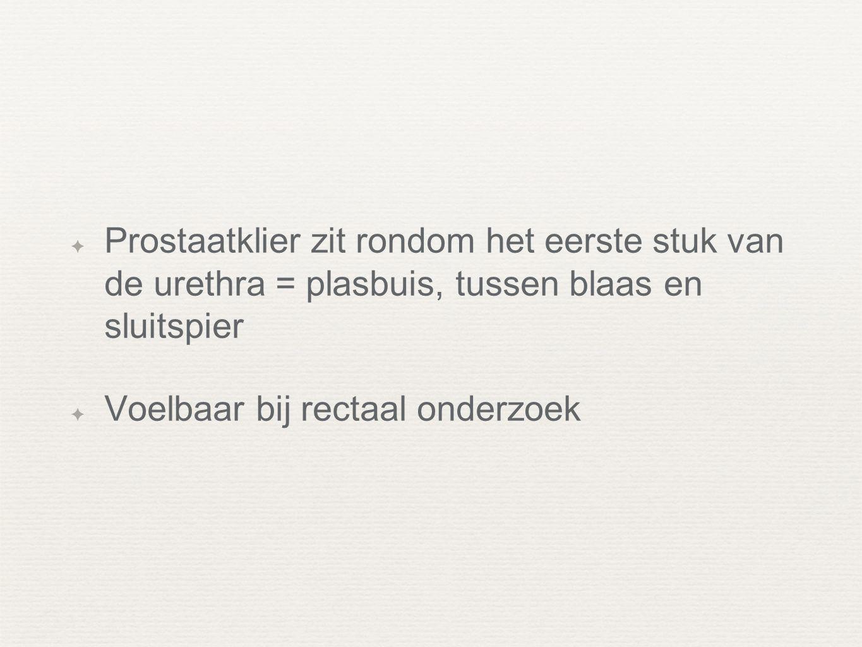 ✦ Prostaatklier zit rondom het eerste stuk van de urethra = plasbuis, tussen blaas en sluitspier ✦ Voelbaar bij rectaal onderzoek