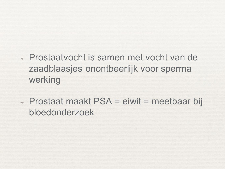 ✦ Prostaatvocht is samen met vocht van de zaadblaasjes onontbeerlijk voor sperma werking ✦ Prostaat maakt PSA = eiwit = meetbaar bij bloedonderzoek