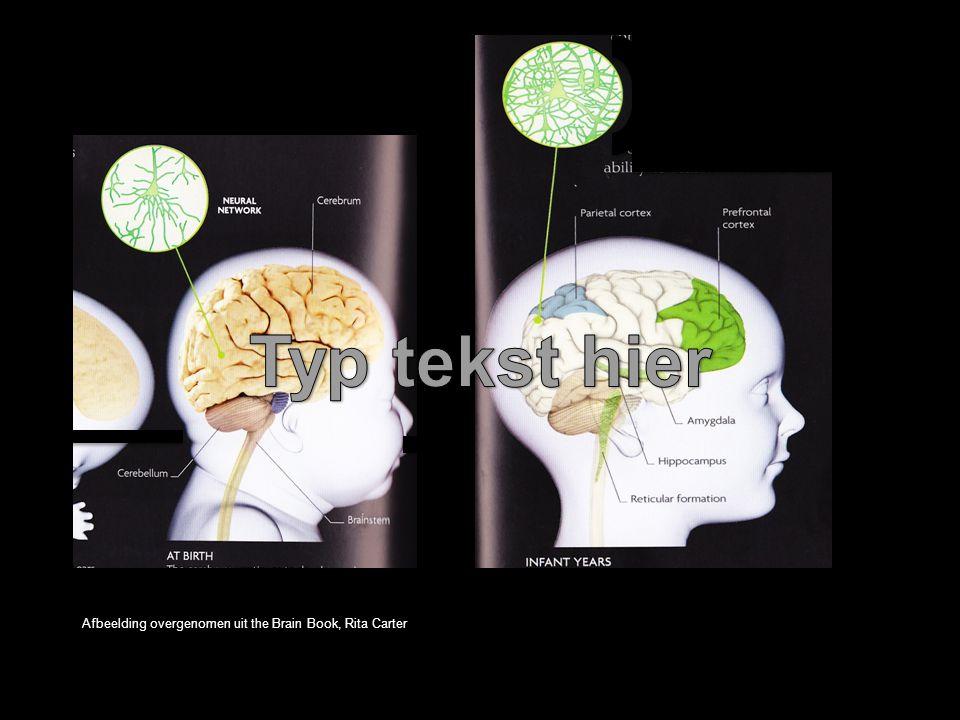 Afbeelding overgenomen uit the Brain Book, Rita Carter