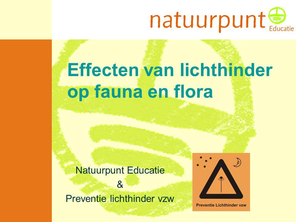 Met de steun van de Vlaamse minister van Leefmilieu, Natuur en Cultuur Verstoring broedvogels •Dagactieve soorten worden nachtactief (foerageergedrag onder verlichting)