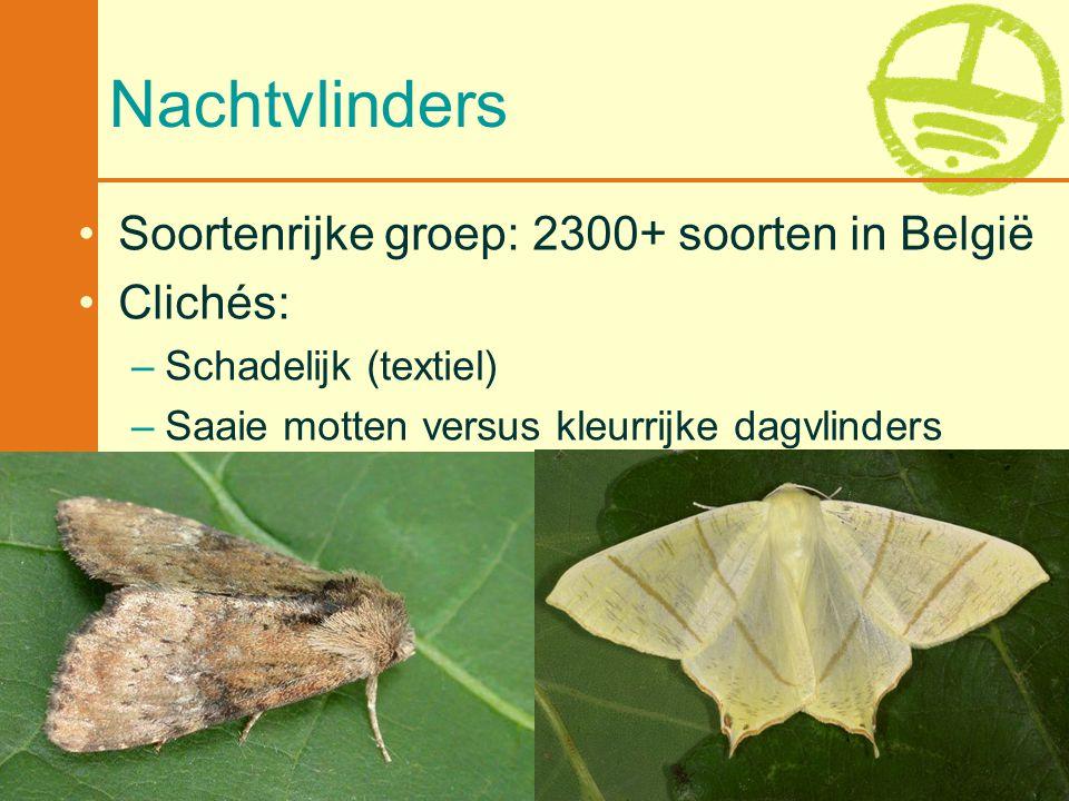 Met de steun van de Vlaamse minister van Leefmilieu, Natuur en Cultuur 11 Nachtvlinders •Soortenrijke groep: 2300+ soorten in België •Clichés: –Schade