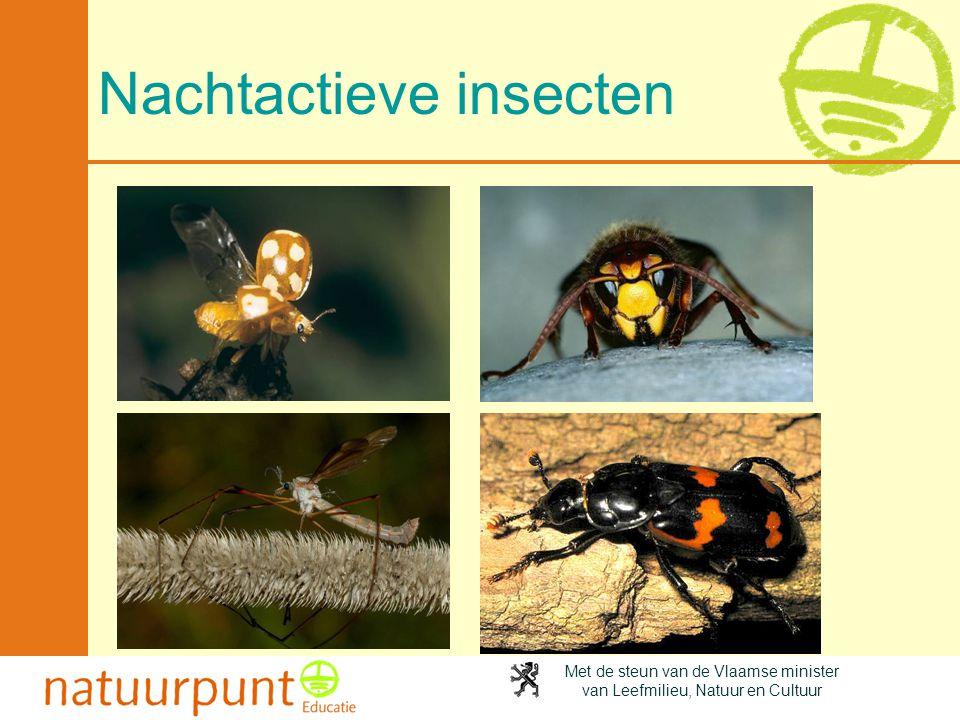 Met de steun van de Vlaamse minister van Leefmilieu, Natuur en Cultuur Nachtactieve insecten