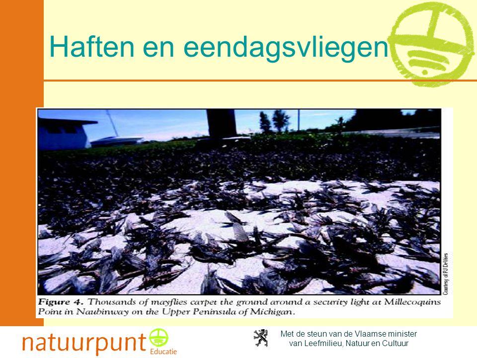 Met de steun van de Vlaamse minister van Leefmilieu, Natuur en Cultuur Haften en eendagsvliegen