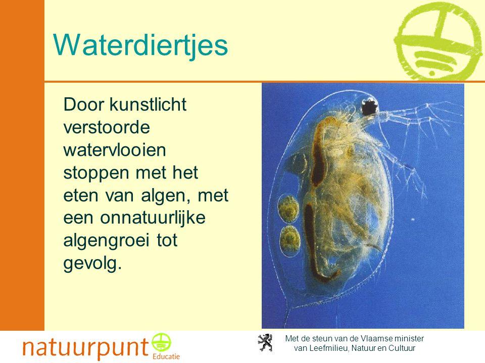 Met de steun van de Vlaamse minister van Leefmilieu, Natuur en Cultuur Waterdiertjes Door kunstlicht verstoorde watervlooien stoppen met het eten van