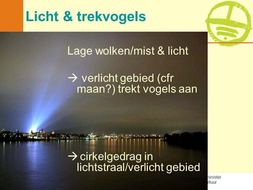 Met de steun van de Vlaamse minister van Leefmilieu, Natuur en Cultuur Licht & trekvogels Lage wolken/mist & licht  verlicht gebied (cfr maan?) trekt