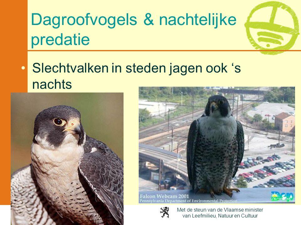 Met de steun van de Vlaamse minister van Leefmilieu, Natuur en Cultuur Dagroofvogels & nachtelijke predatie •Slechtvalken in steden jagen ook 's nacht
