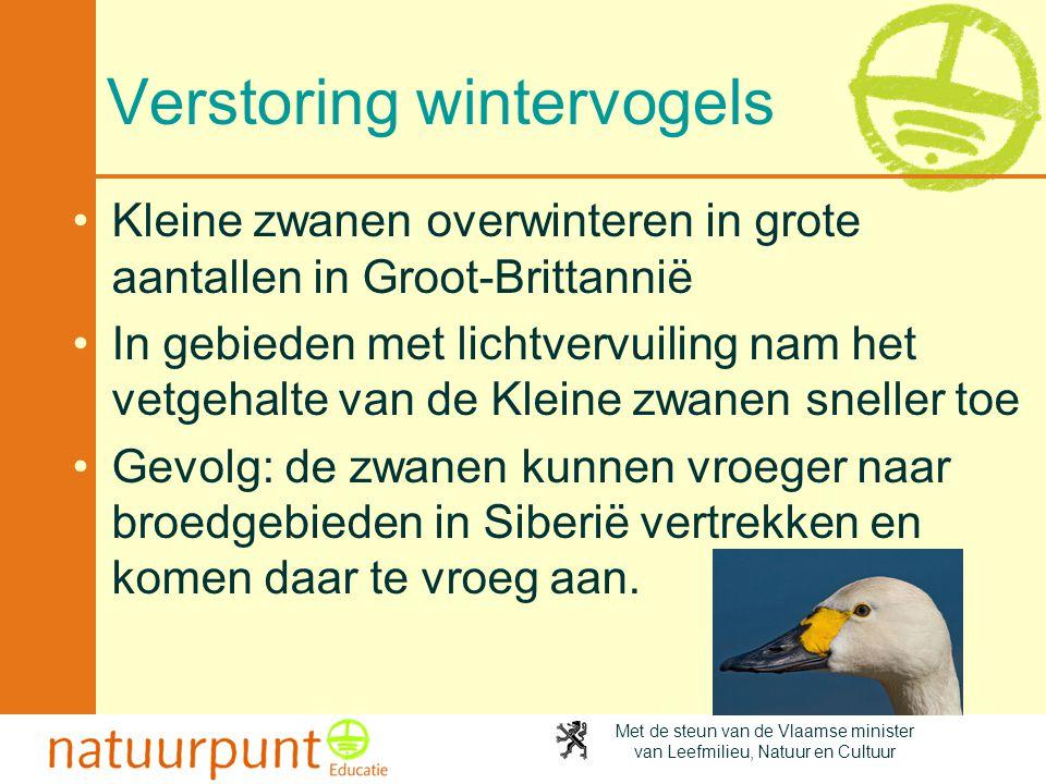 Met de steun van de Vlaamse minister van Leefmilieu, Natuur en Cultuur Verstoring wintervogels •Kleine zwanen overwinteren in grote aantallen in Groot