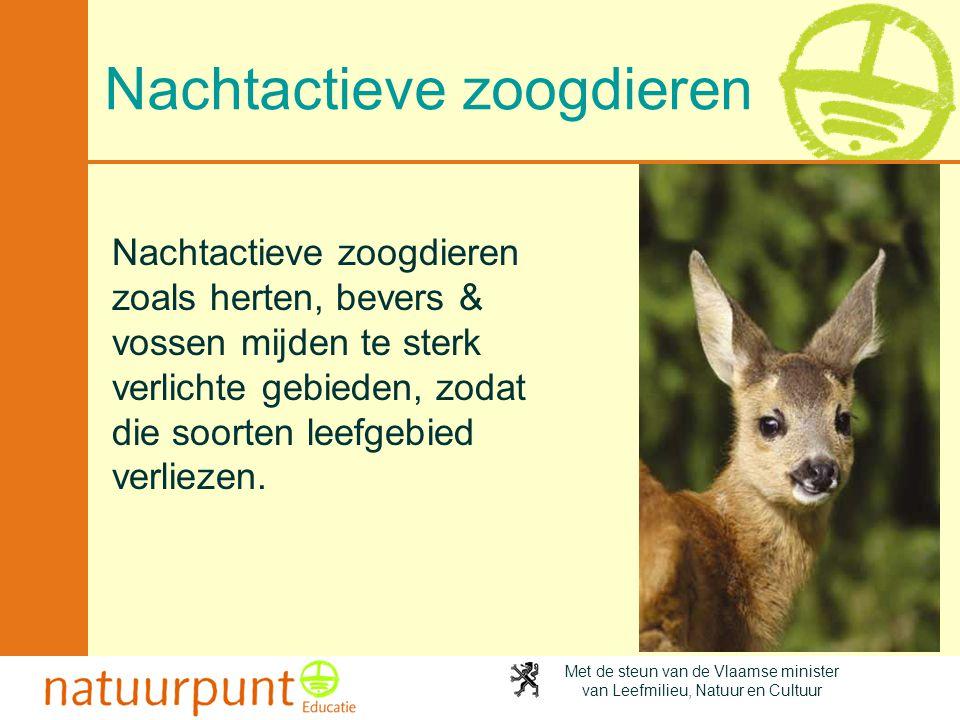 Met de steun van de Vlaamse minister van Leefmilieu, Natuur en Cultuur Nachtactieve zoogdieren Nachtactieve zoogdieren zoals herten, bevers & vossen m