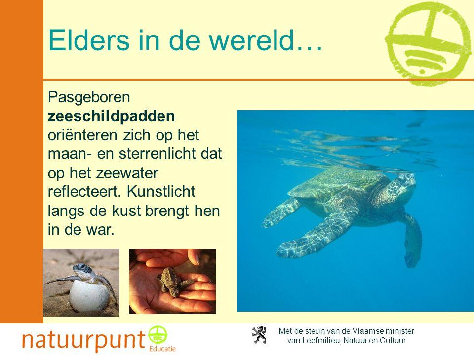 Met de steun van de Vlaamse minister van Leefmilieu, Natuur en Cultuur Elders in de wereld… Pasgeboren zeeschildpadden oriënteren zich op het maan- en