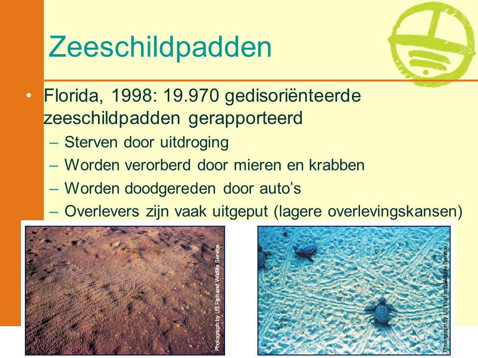 Met de steun van de Vlaamse minister van Leefmilieu, Natuur en Cultuur Zeeschildpadden •Florida, 1998: 19.970 gedisoriënteerde zeeschildpadden gerappo