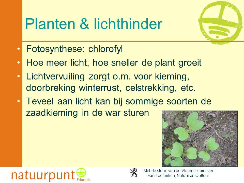 Met de steun van de Vlaamse minister van Leefmilieu, Natuur en Cultuur Planten & lichthinder •Fotosynthese: chlorofyl •Hoe meer licht, hoe sneller de