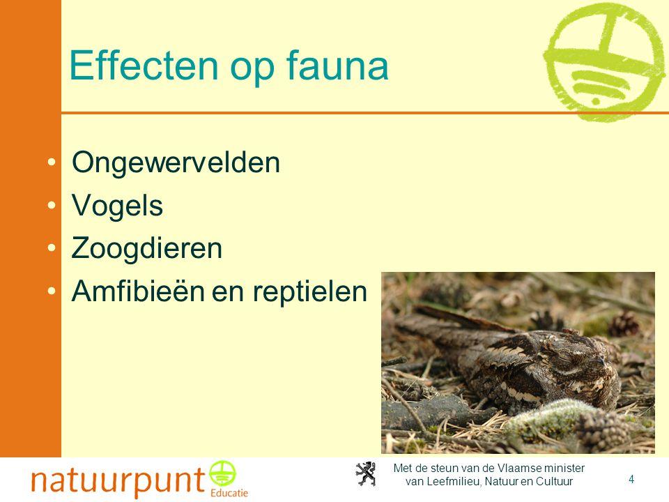 Met de steun van de Vlaamse minister van Leefmilieu, Natuur en Cultuur Waarom insecten op licht afkomen •Klassieke theorie (achterhaald): oriëntatie op de maan