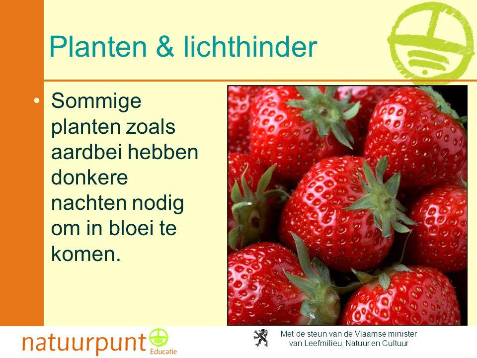 Met de steun van de Vlaamse minister van Leefmilieu, Natuur en Cultuur Planten & lichthinder •Sommige planten zoals aardbei hebben donkere nachten nod