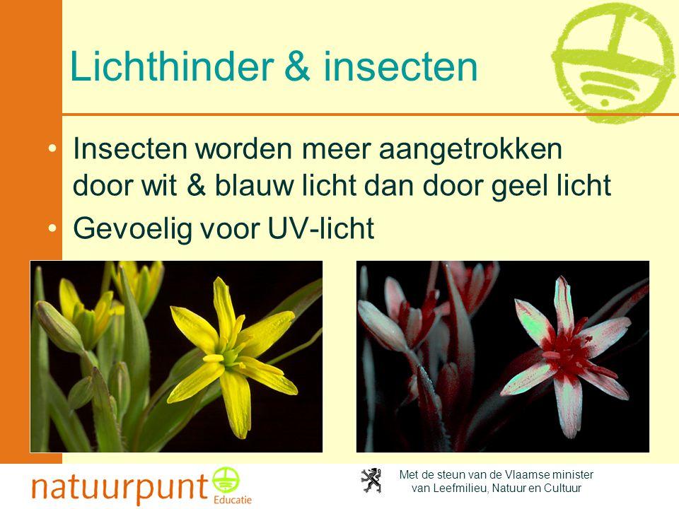 Met de steun van de Vlaamse minister van Leefmilieu, Natuur en Cultuur Lichthinder & insecten •Insecten worden meer aangetrokken door wit & blauw lich