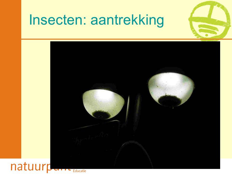 Met de steun van de Vlaamse minister van Leefmilieu, Natuur en Cultuur Insecten: predatie