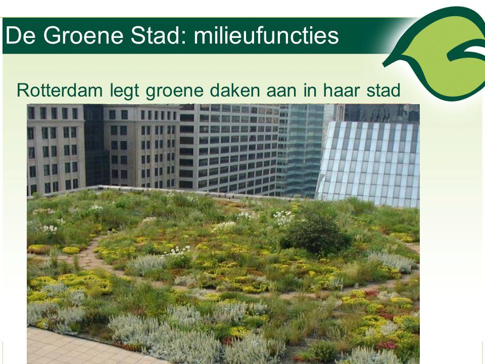 De Groene Stad: milieufuncties Rotterdam legt groene daken aan in haar stad