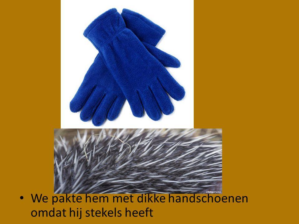 • We pakte hem met dikke handschoenen omdat hij stekels heeft