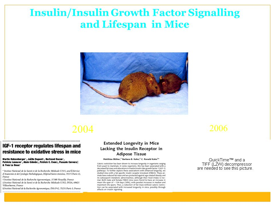 Insulin/Insulin Growth Factor Signalling and Lifespan in Mice 2004 2006