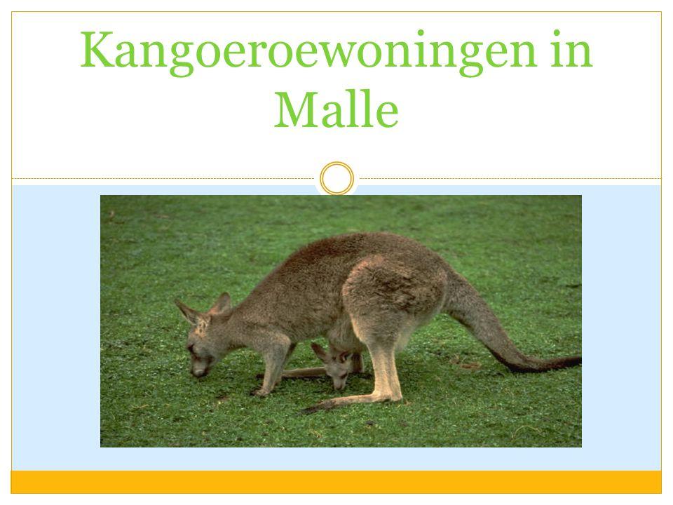'VAN ZORGVISIE NAAR BOUWONTWERP' Kangoeroewoningen in Malle