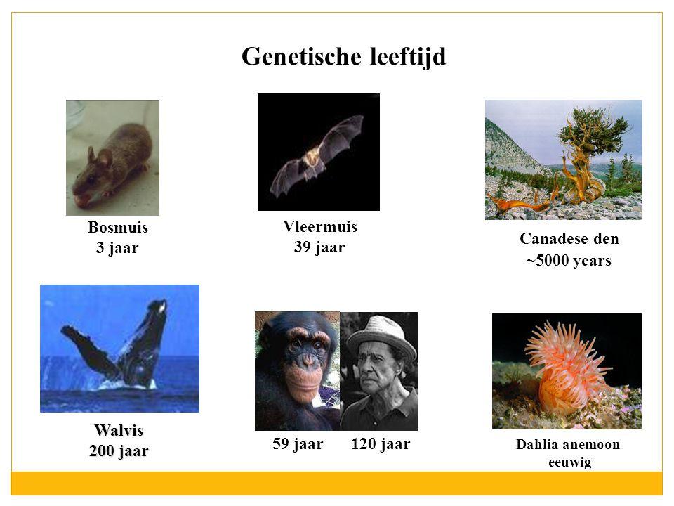 Genetische leeftijd Bosmuis 3 jaar 120 jaar 59 jaar Canadese den ~5000 years Dahlia anemoon eeuwig Walvis 200 jaar Vleermuis 39 jaar
