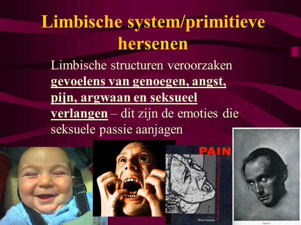 Limbische system/primitieve hersenen Limbische structuren veroorzaken gevoelens van genoegen, angst, pijn, argwaan en seksueel verlangen – dit zijn de