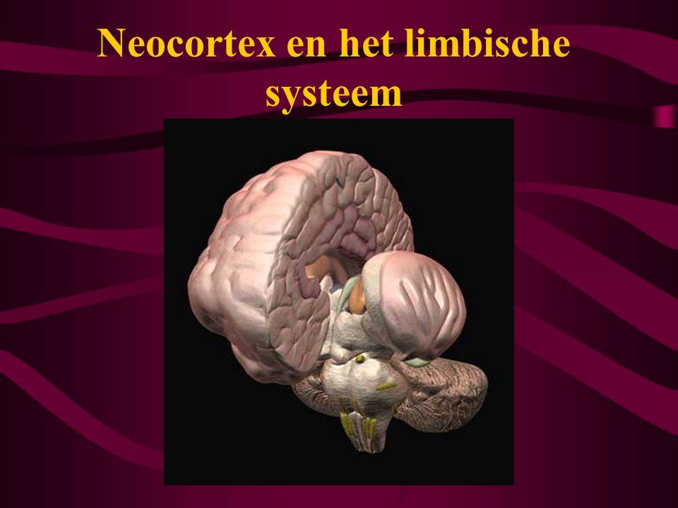 Neocortex en het limbische systeem