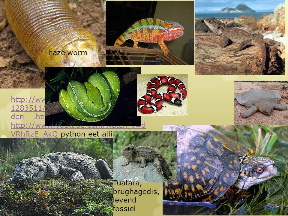 http://www.telegraaf.nl/buitenland/2 1283511/__Grootste_krokodil_overle den__.html http://www.youtube.com/watch?v=d VRhRzE_AkQhttp://www.youtube.com/w