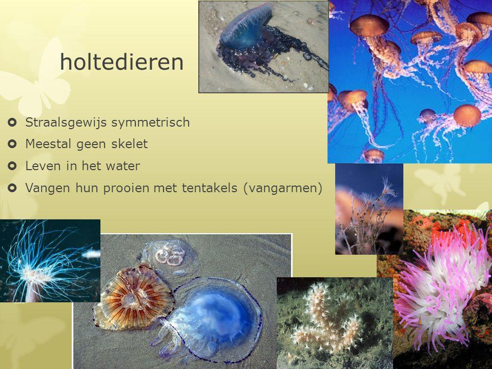 holtedieren  Straalsgewijs symmetrisch  Meestal geen skelet  Leven in het water  Vangen hun prooien met tentakels (vangarmen)